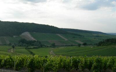 Le Bordeaux et ses cépages