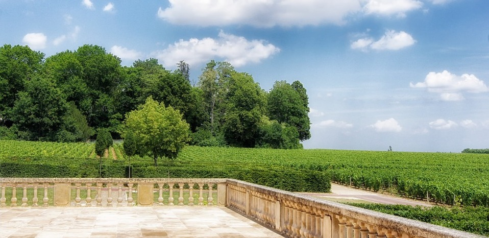 L'Histoire des vins de l'Yonne