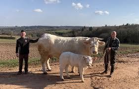 bovins nouvelle aquitaine