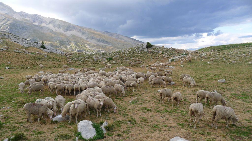 L'élevage, partie intégrante de l'histoire de France