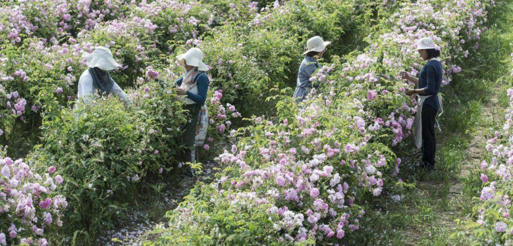 L'Histoire des Parfums de Grasse