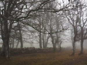 Forêt d'hêtres
