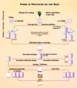 Schéma de vinification vins rosé