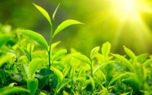 Plantes Bio