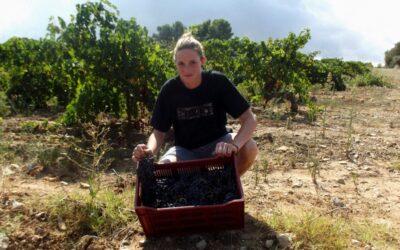 Vendanges dans le Beaujolais, la qualité sans les quantités
