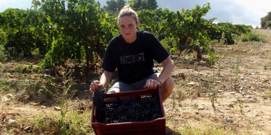 Vendanges Manuelles 2019, Beaujolais