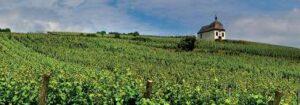 Paysages viticoles, Alsace
