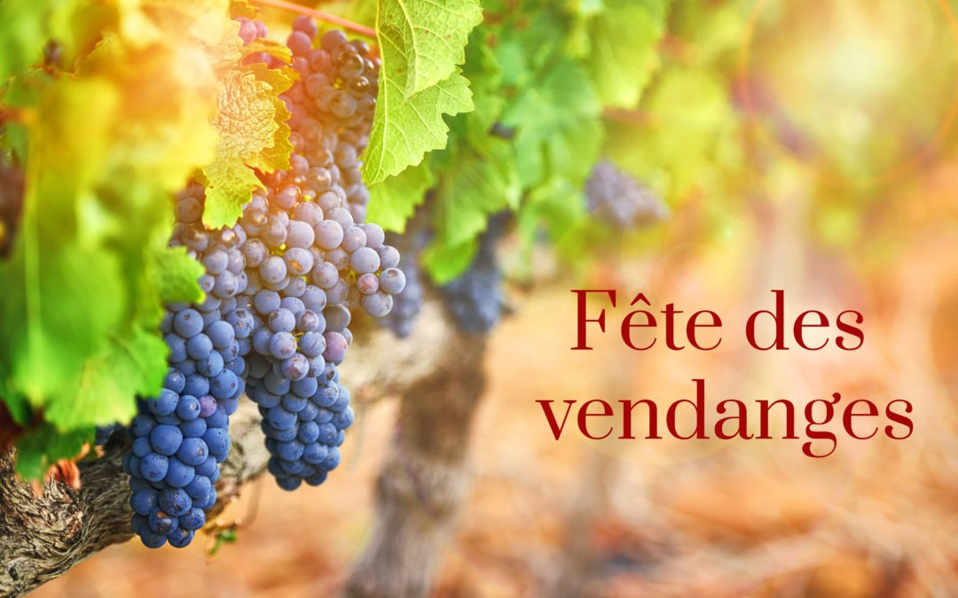 Vendanges 2019 en Provence, incertitudes sur les rendements