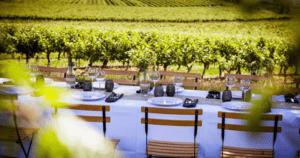 Table dréssée vignoble 2019, Cognac