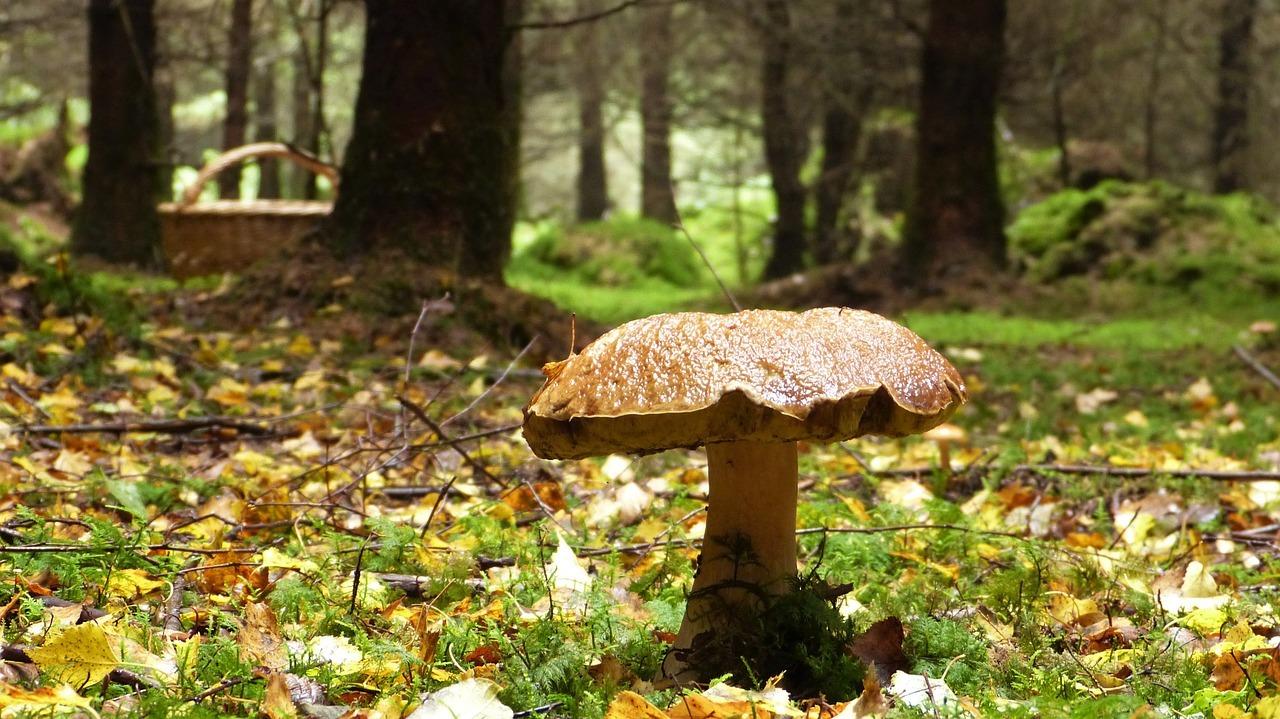 Partons ramasser les champignons