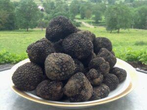 La truffe sauvage