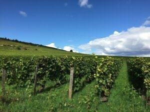 Les vignes en Bourgogne,