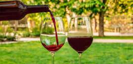verres à vins Gamay