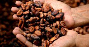 L'écabossage, Cacao