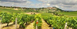 Les vignes de la Loire