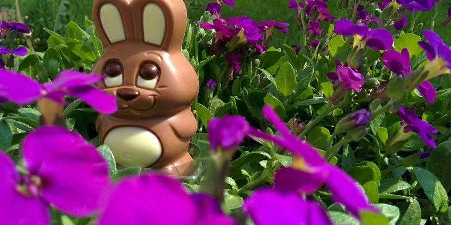 Les lapins de Pâques en Belgique,