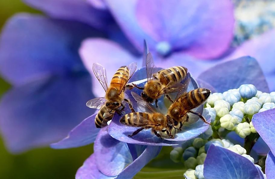 La place du Miel en France