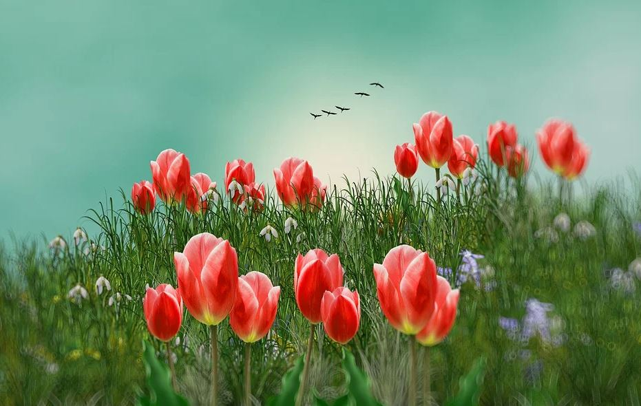 Photos de printemps,