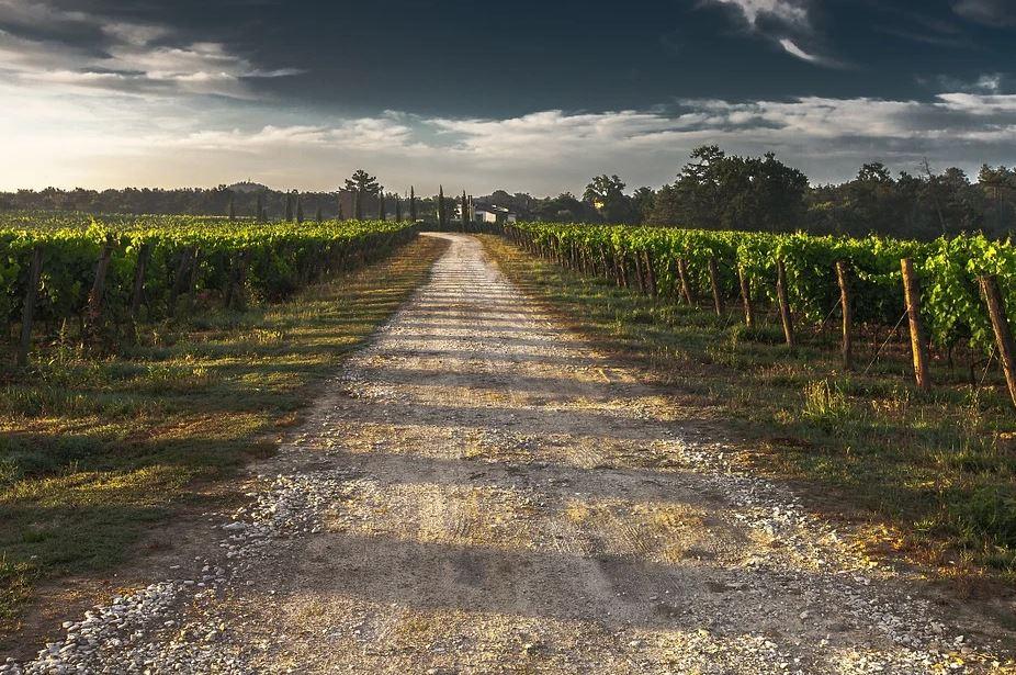 L'histoire des vins du Rhône