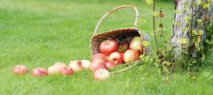 Bannière de Pommes,