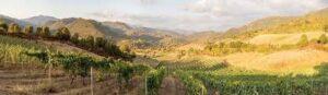 les coteaux Vins de Corse
