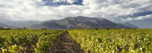 Bannière vins de Corse,