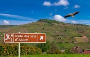 Route des vins d'Alsace,
