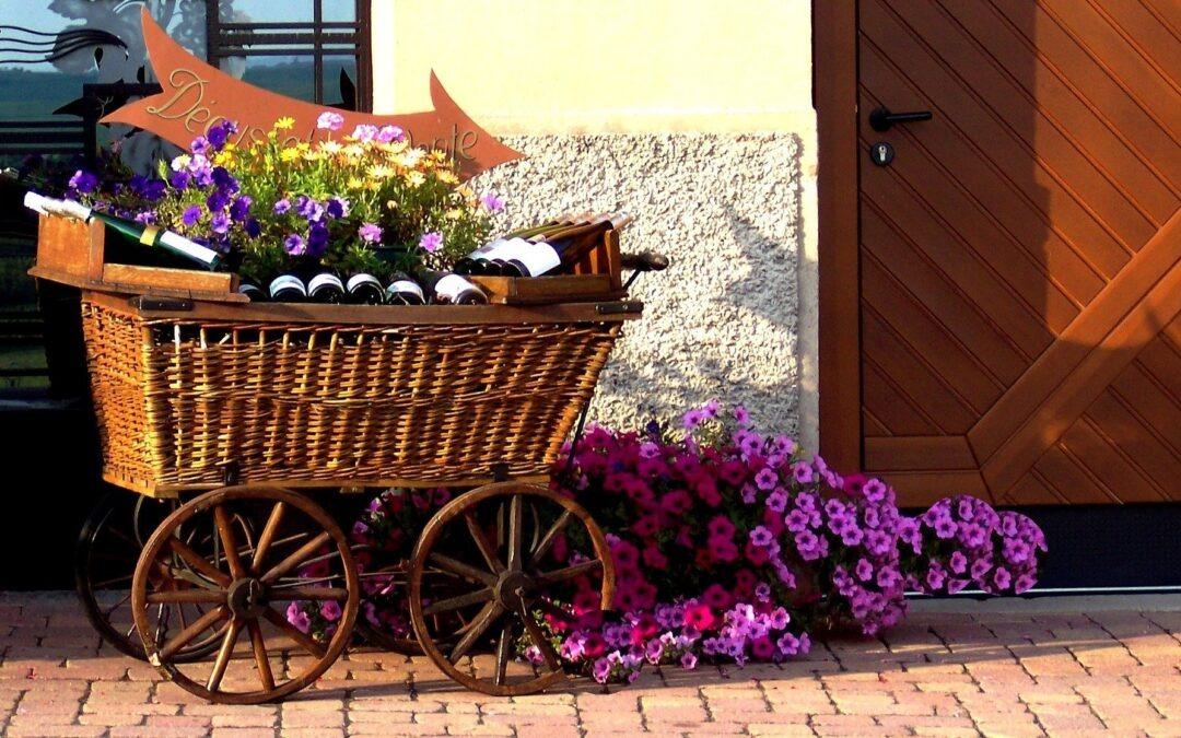 Les vins d'Alsace,