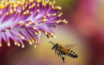 L'emballage en cire d'abeille, un geste éco-responsable