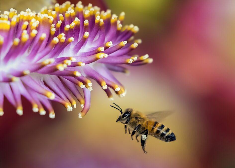 Fleurs, abeilles