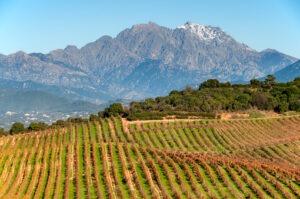 Vignobles Corse,