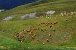 Elevage de haute montagne, Pyrénées,