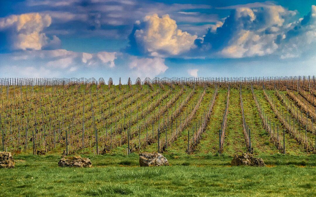 Vignes Chjampagne Ardenne