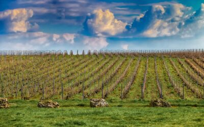 La Champagne-Ardenne, terre de traditions et de gastronomie