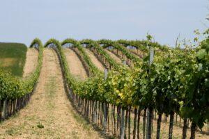 Vigne Nouvelle-Aquitaine,