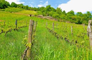 Les vignobles d'Auvergne-Rhône-Alpes,