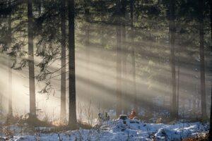Les Forêts du Jura,