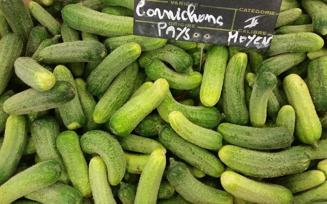 Le renouveau de la culture du cornichon en France