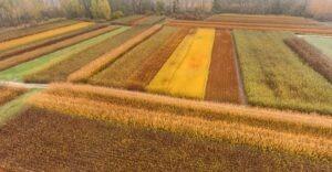 Osiériculture et Vannerie-Loire-Anjou-Touraine,
