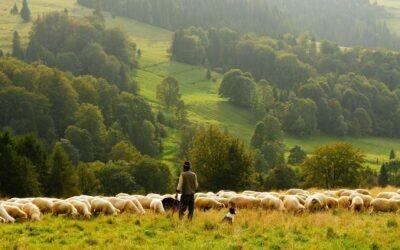 Zoom sur le Greuil, le fromage du Pays Basque